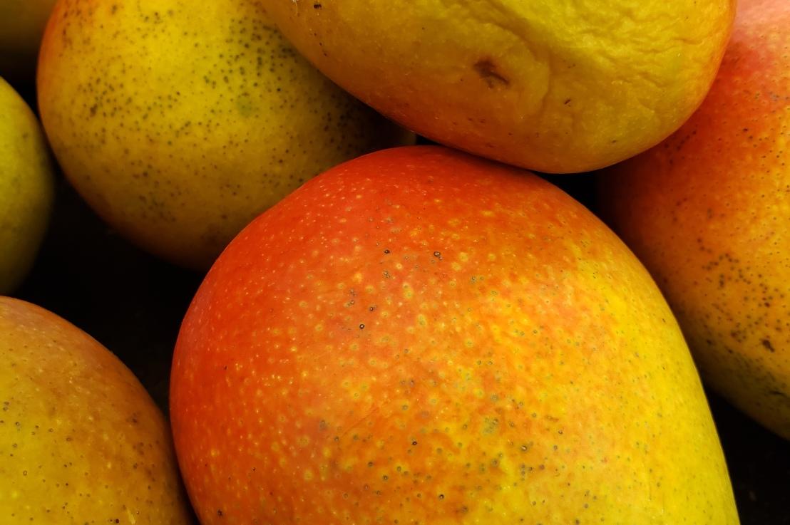 Week 19 –Mango